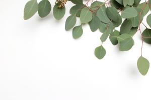 Melbourne-Brunswick-Naturopath-herb-nature