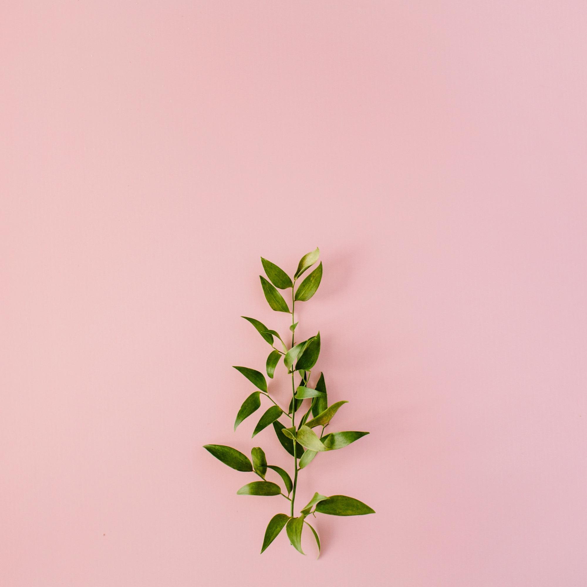 Melbourne-Brunswick-Naturopath-herb